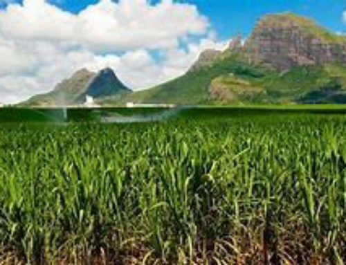 The resilience of the sugar industry