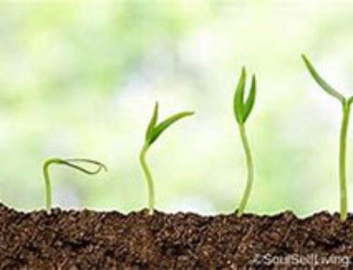 A new economic paradigm: from sustainability to regeneration